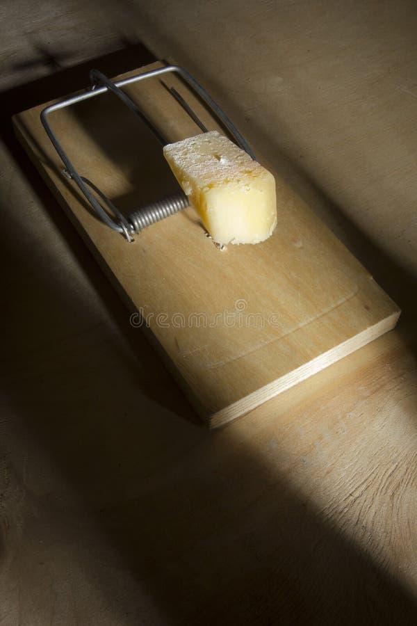 Fromage dans une sourici?re ? clapet images stock