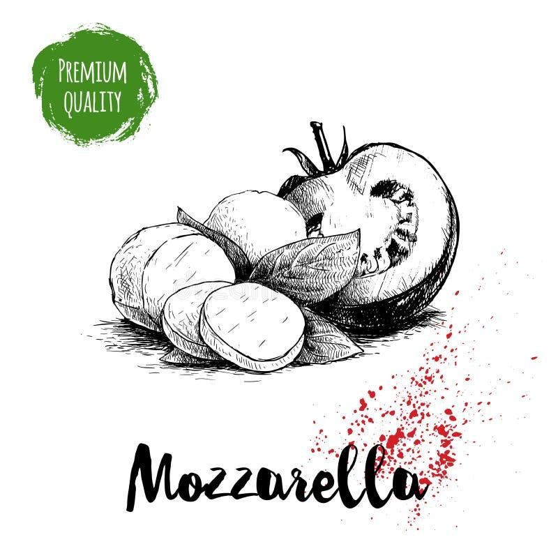 Fromage tiré par la main de mozzarella de style de croquis avec des feuilles de basilic et la moitié de la tomate Ingrédients de  illustration de vecteur