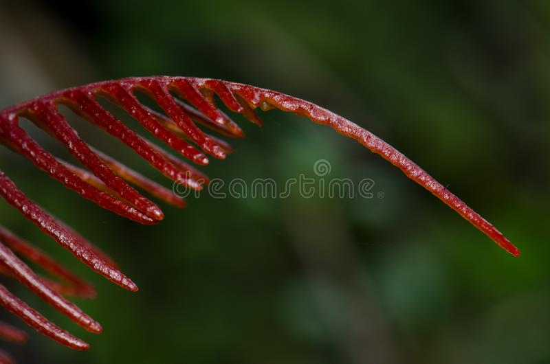 Frond of fern. royalty free stock photography