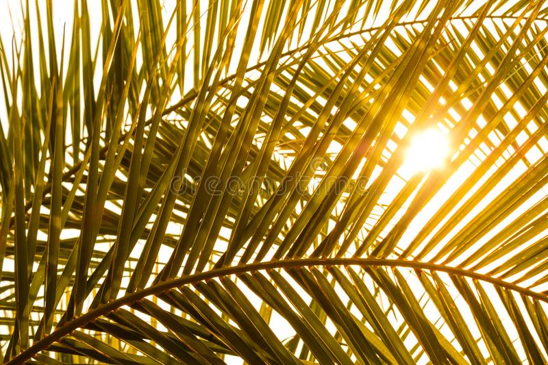 Fronda della palma con ombra ed il sole immagine stock