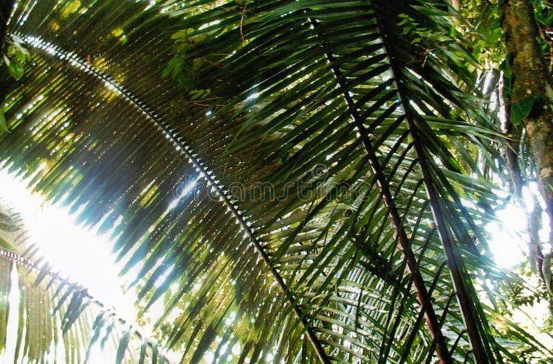 Frondas da palma na luz solar fotos de stock royalty free