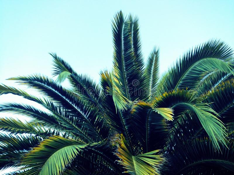 Frondas da palmeira imagem de stock royalty free