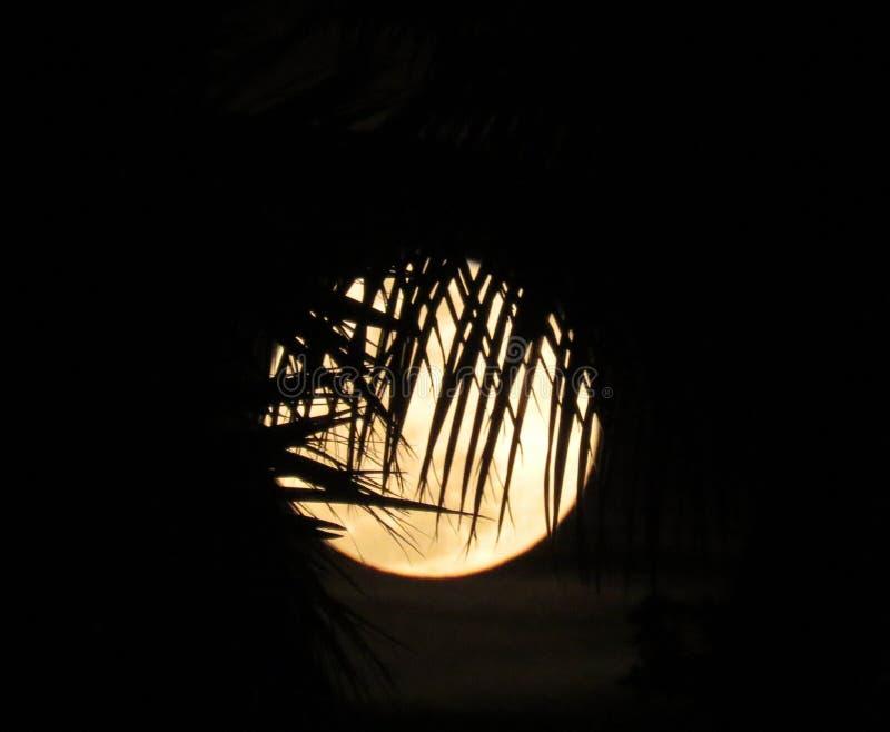 Frondas de la palma del claro de luna fotografía de archivo libre de regalías