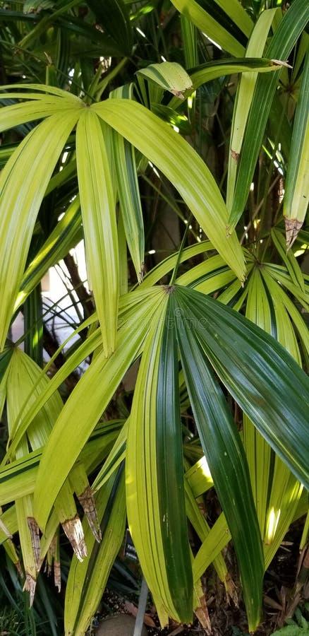 Frondas variadas de la palma en la arquitectura del Prado Historic de la casa en el parque San Diego California del balboa imagenes de archivo
