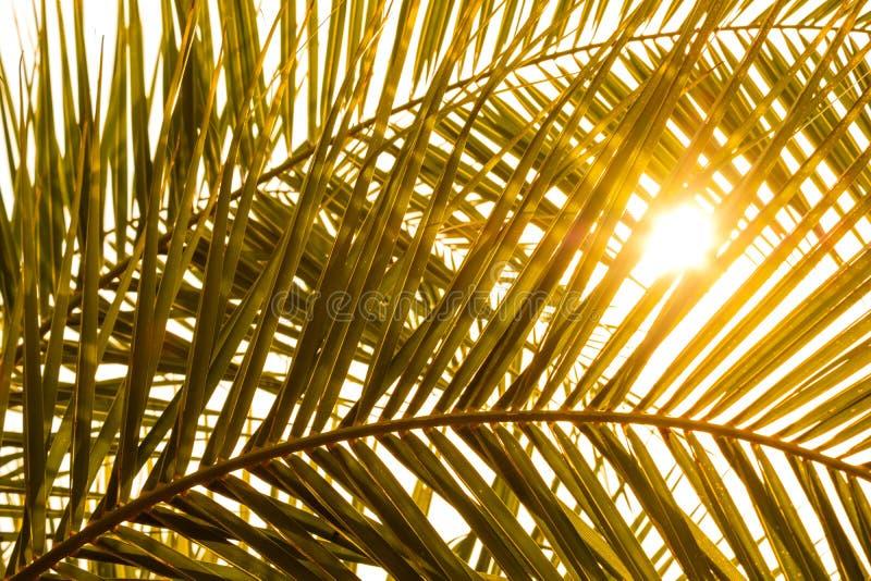 Fronde de paume avec l'ombre et le soleil image stock