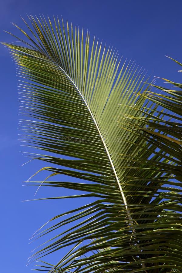 Fronde de paume contre un ciel bleu image stock