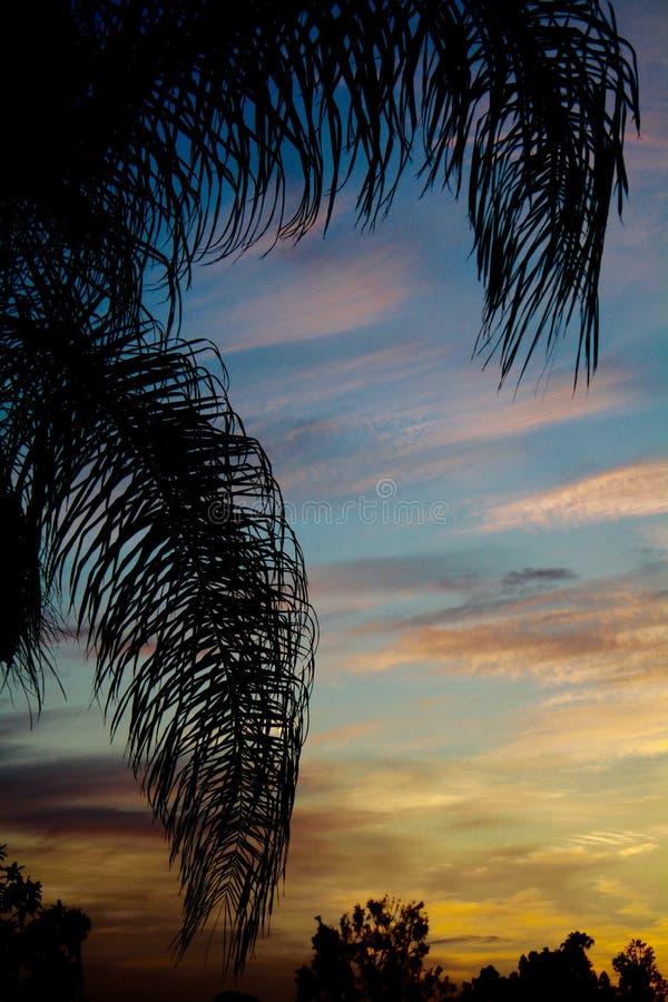 Fronde della palma di California del sud profilate sul verticale drammatico di tramonto immagini stock