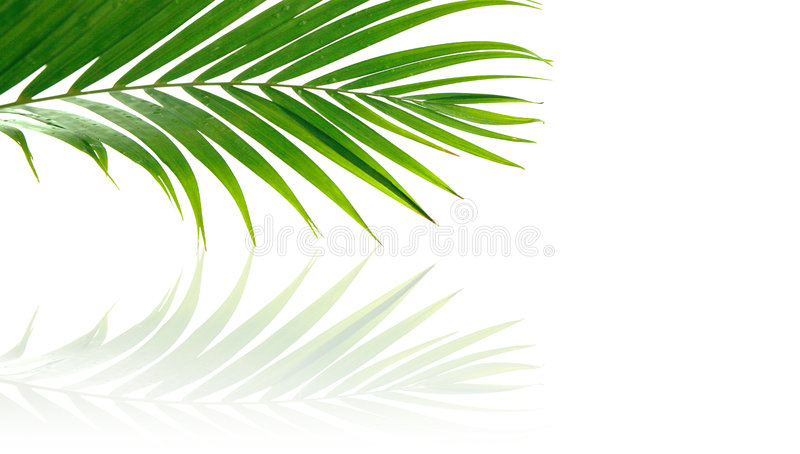 Fronde tropicali della palma fotografie stock libere da diritti