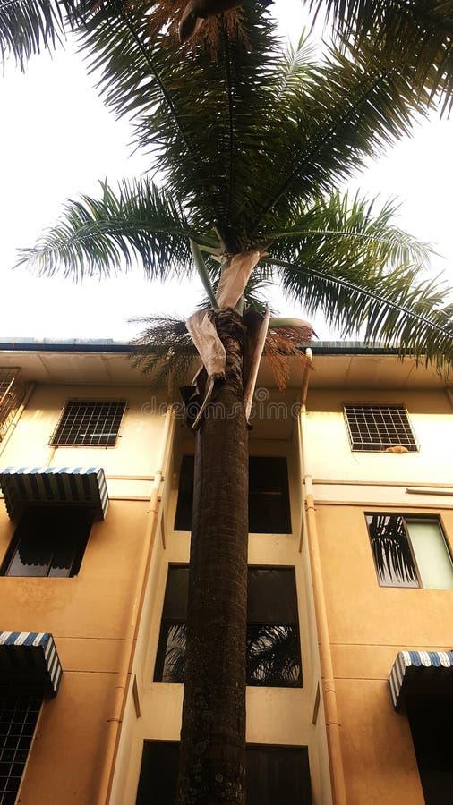 Fronds drzewko palmowe obrazy royalty free
