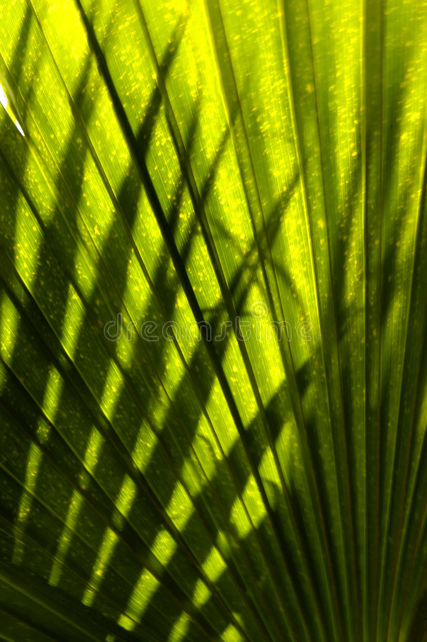 Fronds and Shadows royalty free stock photo