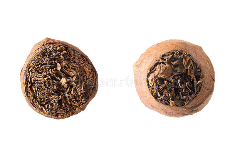 Front and back views of cigar royalty free stock photo