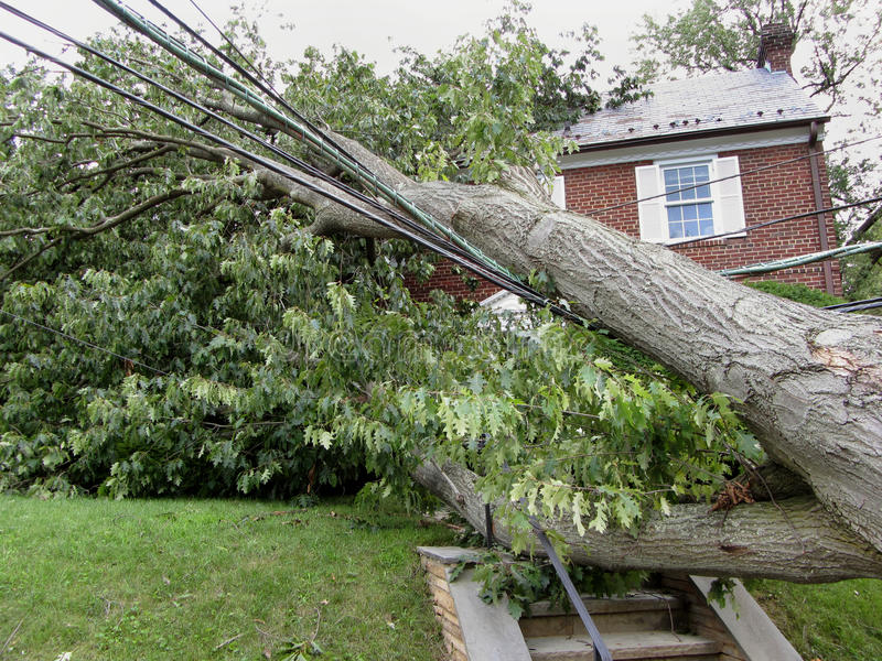 Front Door Blocked. Photo of uprooted tree that has fallen on a brick house in washington dc blocking the front entrance. This occurred after the passage of royalty free stock images