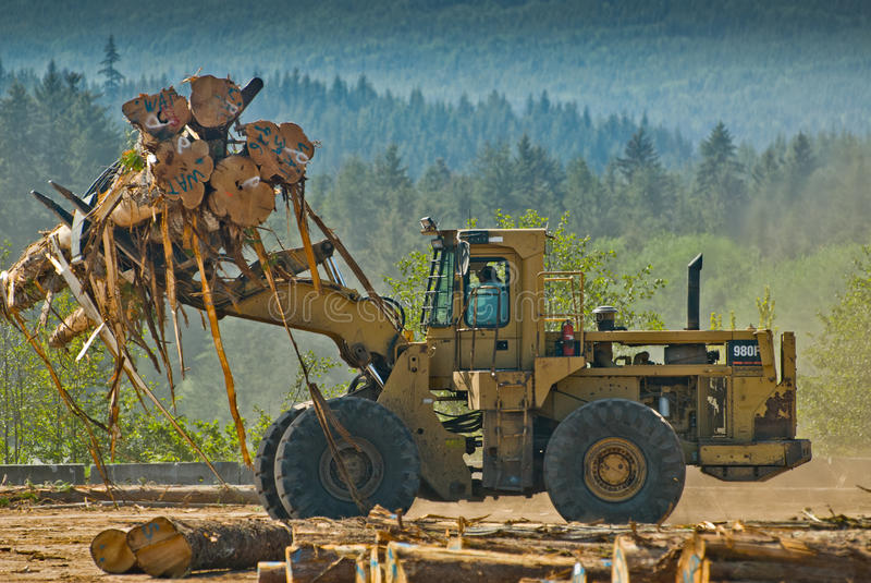 Front end loader lifting logs. Front end loader sorting Western Redcedar, Thuja plicata, logs on log sort in Queen Charlotte City, Haida Gwaii, BC, Canada stock photos