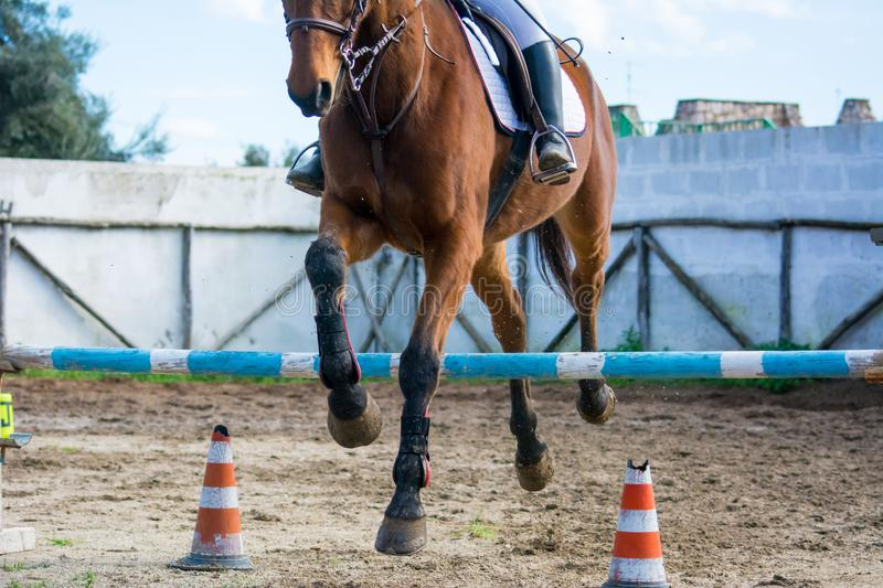 Front Horizontal View Of A Brown Horse Jumping The Obstacle. During An Equestrian Competition On Blur Background stock photography