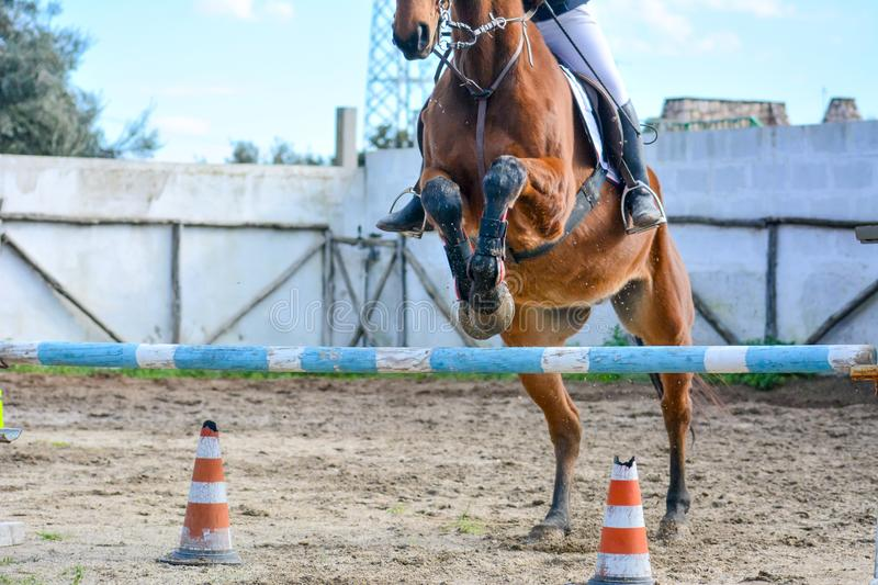 Front Horizontal View Of A Brown Horse Jumping The Obstacle. During An Equestrian Competition On Blur Background stock image