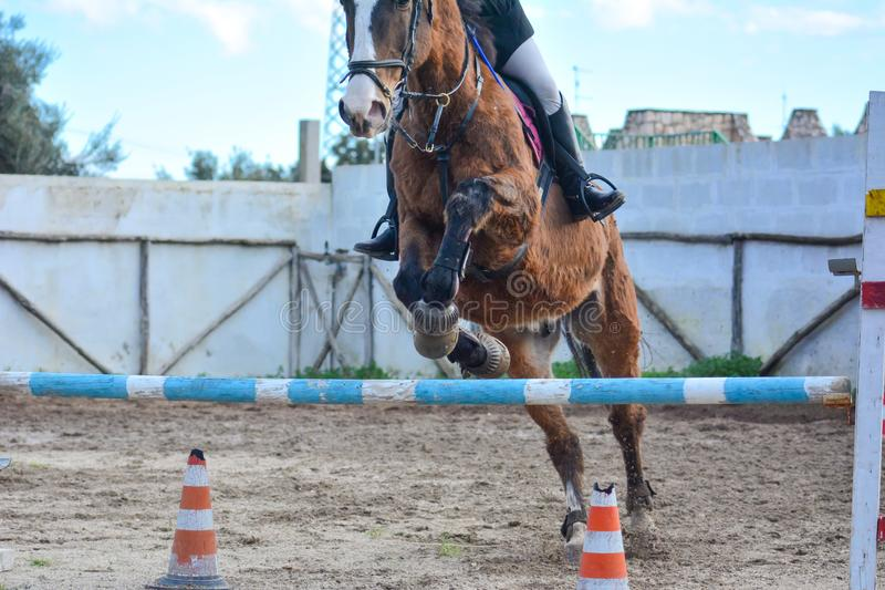 Front Horizontal View Of A Brown Horse Jumping The Obstacle. During An Equestrian Competition On Blur Background stock photo
