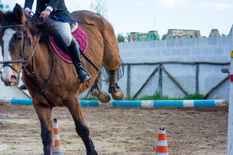Front Horizontal View Of A Brown Horse Jumping The Obstacle. During An Equestrian Competition On Blur Background royalty free stock photography