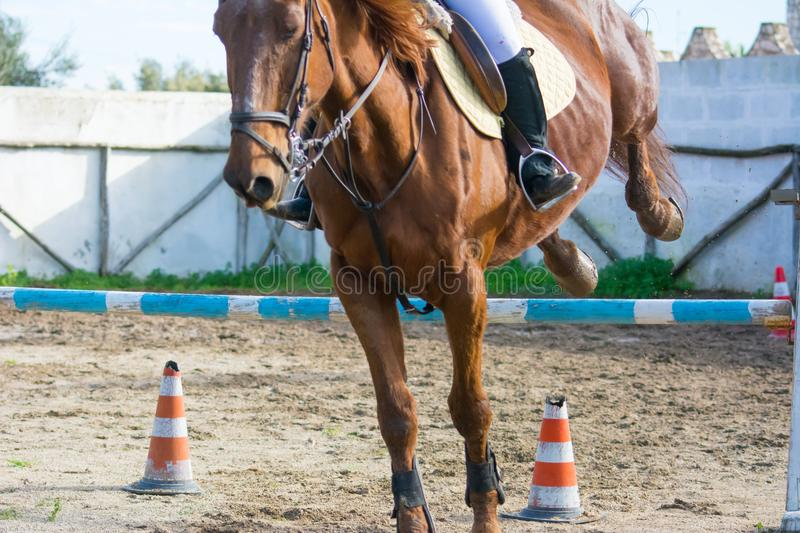 Front Horizontal View Of A Brown Horse Jumping The Obstacle. During An Equestrian Competition On Blur Background royalty free stock photo