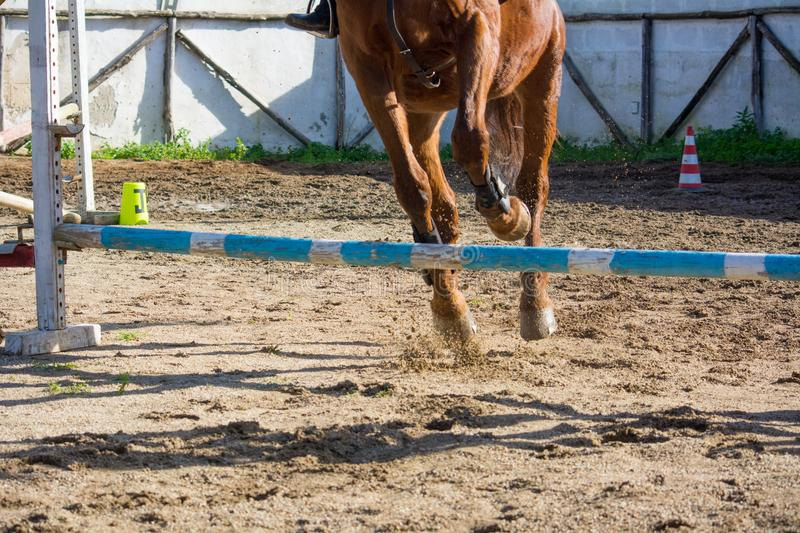 Front Horizontal View Of A Brown Horse Jumping The Obstacle. During An Equestrian Competition On Blur Background royalty free stock photos