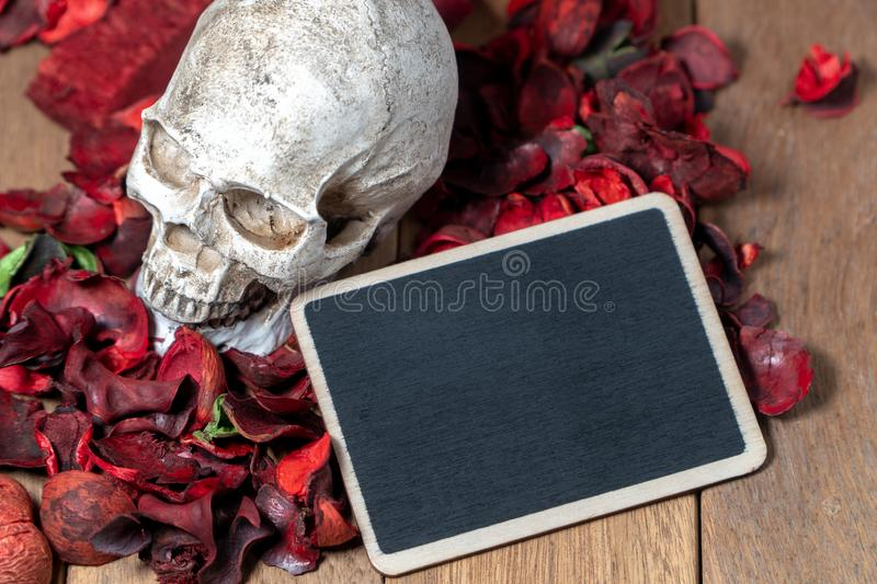 In front of human skull placed on red dried flowers on the wooden background with blank blackboard for text and content of death a stock images