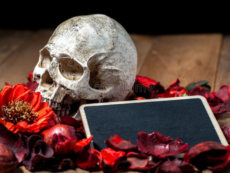 In front of human skull placed on red dried flowers on the wooden background with blank blackboard for text and content of death a stock photos
