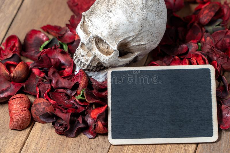 In front of human skull placed on red dried flowers on the wooden background with blank blackboard for text and content of death a royalty free stock photography