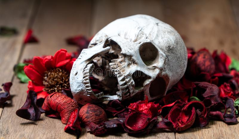 In front of human skull placed on red dried flowers on the wooden background.concept of death and Halloween. stock photos