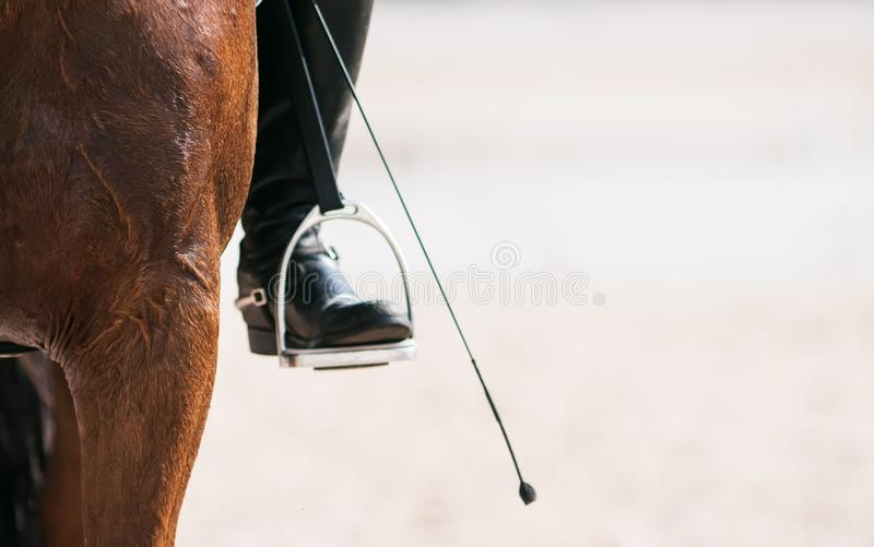 The front leg of the horse, the leg of the rider in the stirrup and the whip royalty free stock images