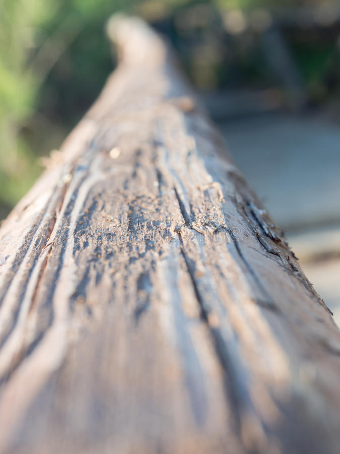 In front of old wood tie. Example of depht of field in photography royalty free stock photos