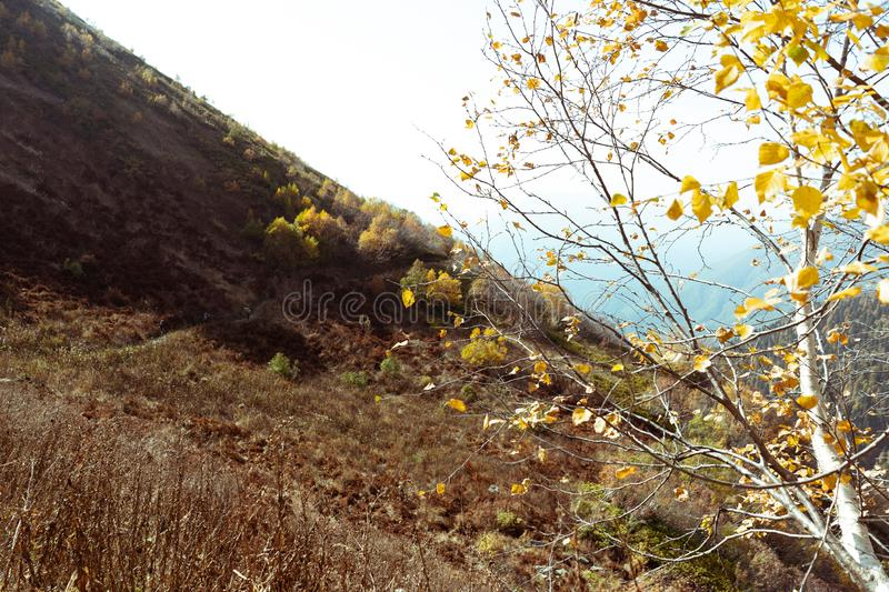 Tree with fallen yellow leaves against a background of a mountain landscape on a warm sunny autumn day. On the front plan, a tree with fallen yellow leaves stock photography