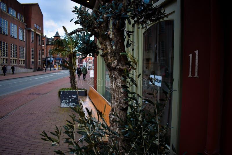 Front Restaurant Italian Palm Old-Boom Front Bordeaux Green stock afbeeldingen