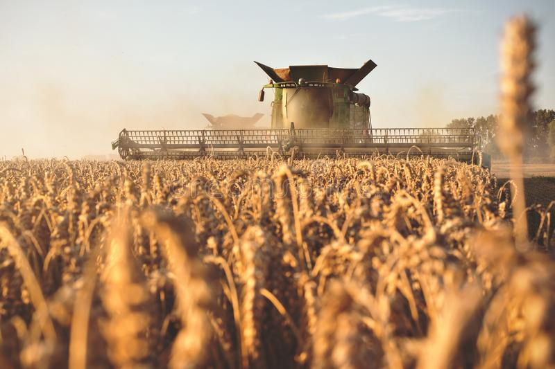 Combine harvester working on a wheat field stock image