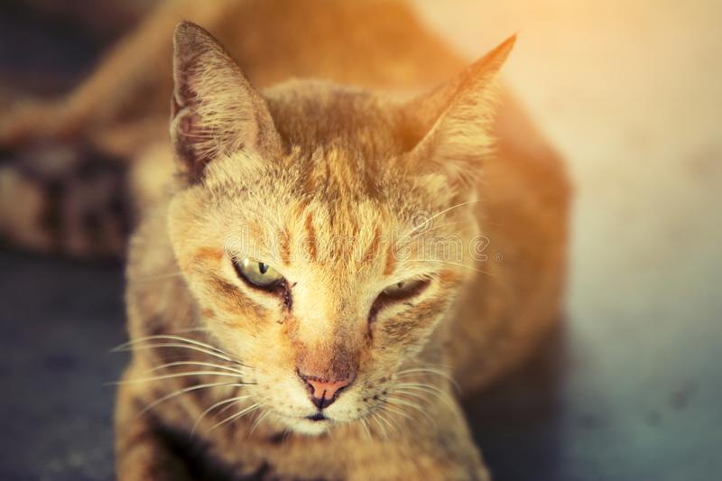 Front view cute face a cat royalty free stock photography
