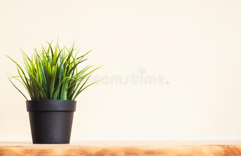 Flowerpot on wood table royalty free stock photography
