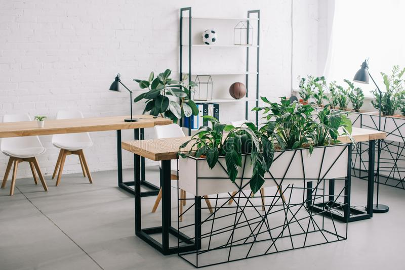 Front view of interior of modern office with furniture. And plants stock photos