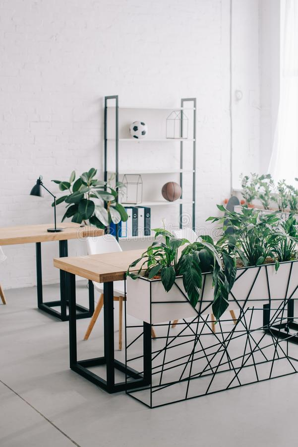 Front view of interior of modern office with furniture and plants royalty free stock photo