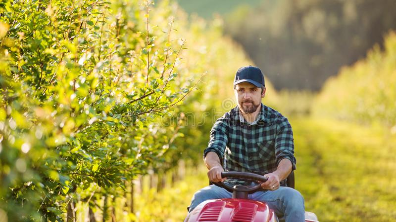 A mature farmer driving mini tractor outdoors in orchard. stock image