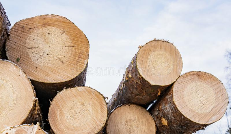 Front view of pile of pine tree logs after clear cut of forest in Northern Sweden. Cloudy winter day, Lappland, Scandinavia royalty free stock image