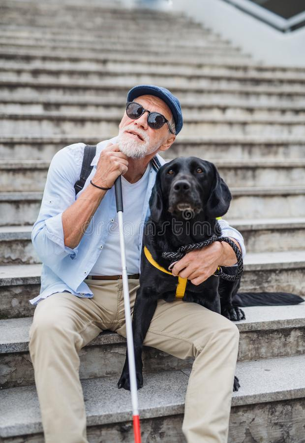 Front view of senior blind man with guide dog sitting the stairs in city. stock photo