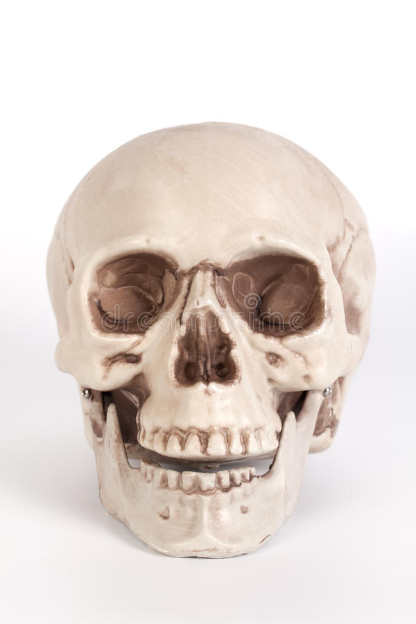 Front View Of A Skull ...