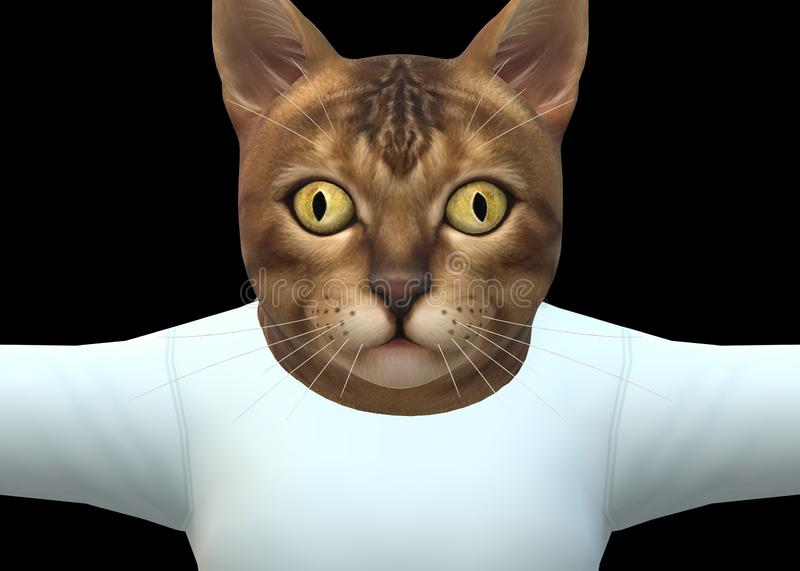 Front view of a tabby cat kitten wearing a plain white tee shirt royalty free stock photos