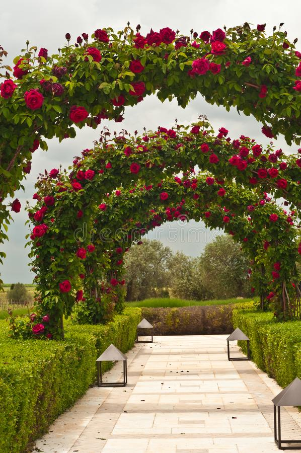 Front view of a Wedding garden of arching roses at a southwest winery in Spain stock photography