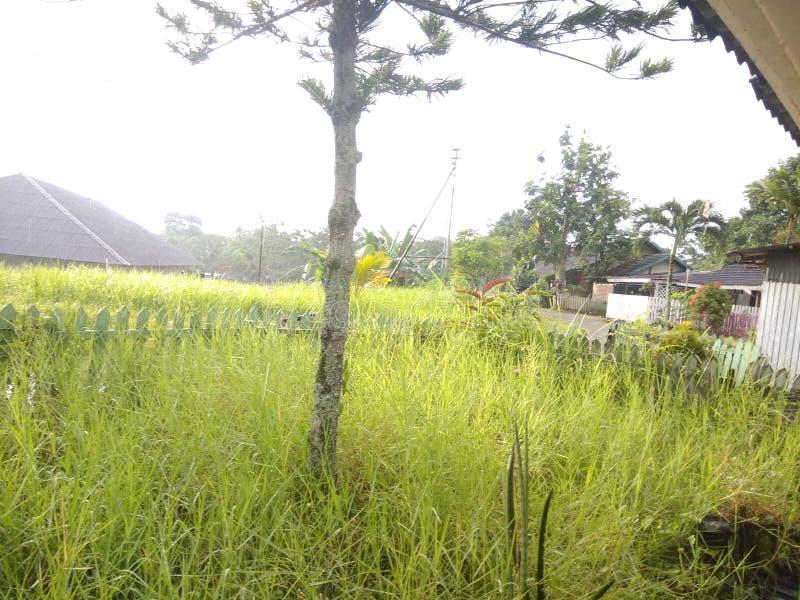 Front Yard photo libre de droits