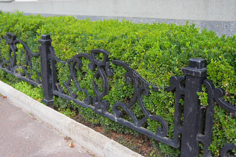 Front Yard Landscape Design with Boxwood Hedges. Boxwood Hedge with small metal fence. Living Fence. Front Yard Landscape Design with Boxwood Hedges. Boxwood stock photos