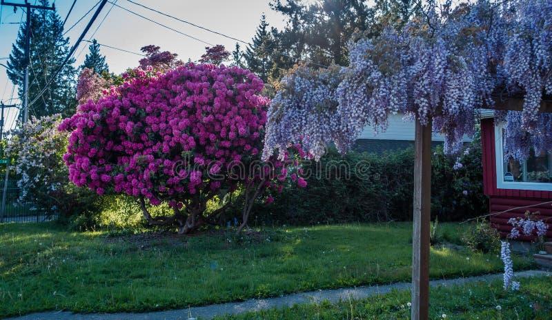 Front Yard Spring Flowers fotografia stock libera da diritti