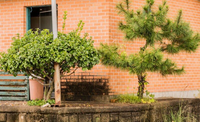 Front zwei kleine Bäume n des alten Gebäudes des roten Backsteins lizenzfreies stockfoto