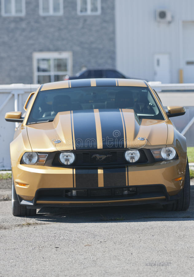 Frontal de mustang images libres de droits