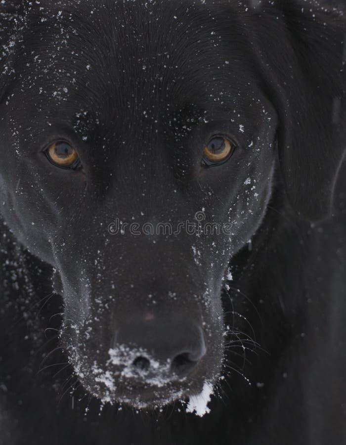 Fronte del cane del primo piano immagini stock
