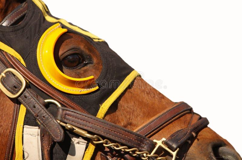 Fronte del cavallo di corsa con lo spazio della copia fotografie stock libere da diritti