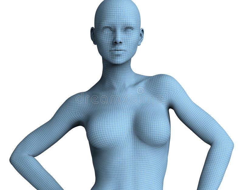 Fronte della donna nelle linee del wireframe isolate su bianco illustrazione 3D illustrazione di stock